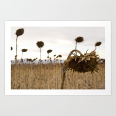 Mourning Field  Art Print