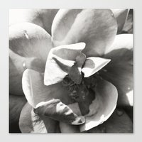 Black & White Rose Canvas Print