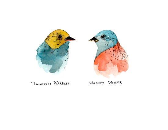 TWO WARBLERS Art Print