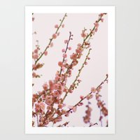 Pink Skies And Apricots Art Print
