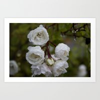 White Miniature Roses Art Print