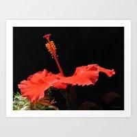 Hibiscus Pistil Art Print