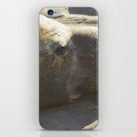 Elephant Seal: Contempla… iPhone & iPod Skin