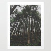 Tall Trees Art Print