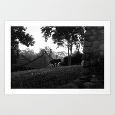 Balinese monkey ascending slope Art Print