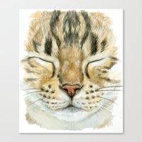 Sleeping Tabby Cat  830 Canvas Print