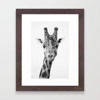 Handsome Giraffe Framed Art Print