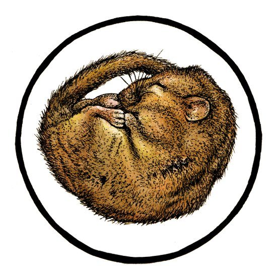 Dormouse Art Print