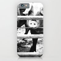 iPhone & iPod Case featuring Pig Farm 2 by christopher justin gilner photographic