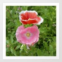 Two Poppys Bloom IV Art Print