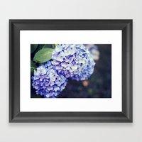 Purple Hydrangeas Framed Art Print