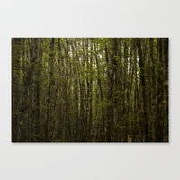 Forest For Trees Canvas Print