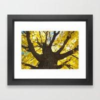 Yellow Fall  Framed Art Print