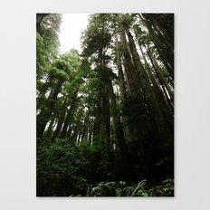 Redwoods #1 Canvas Print