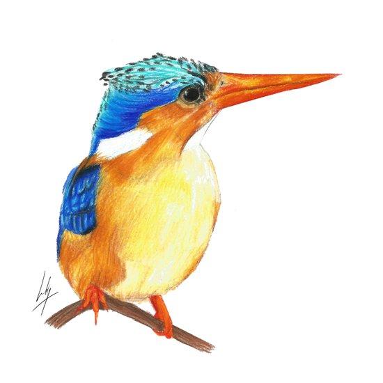 Kingfisher I Art Print