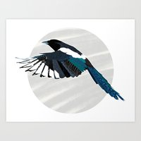 Magpie in Flight Art Print