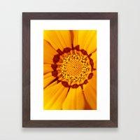 Orange Sun - gazania flower 3509 Framed Art Print