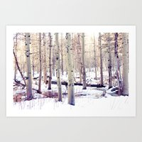 Aspen Trees in Winter Art Print