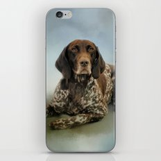 Waiting For A Cue - German Shorthaired Pointer iPhone & iPod Skin