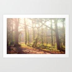 Woodland Fog Art Print