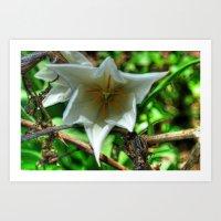 Flower - HDR Art Print