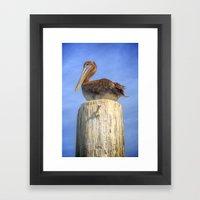 Nigel the Pelican Framed Art Print