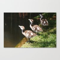 Three Little Ducklings Canvas Print