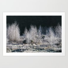 Young trees covered in a thick white frost. Norfolk, UK. Art Print