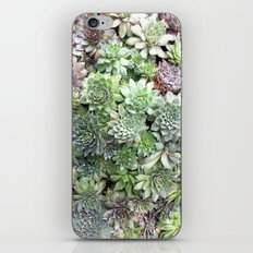 Desert Flower I iPhone & iPod Skin