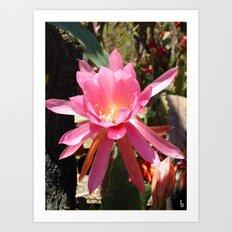 Starburst Blossom I Art Print