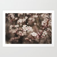 cherry blossom Art Prints featuring Cherry Blossom by Evan Dalen