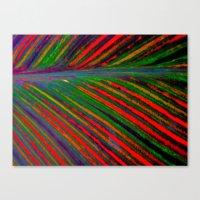 Tropicanna Canvas Print
