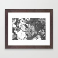 summer roses Framed Art Print