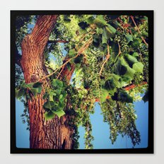 Oak Tree, Ghost Ranch, New Mexico Canvas Print