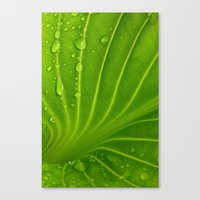 After The Rain # 9 Canvas Print