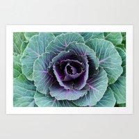 Cabbage Art Print