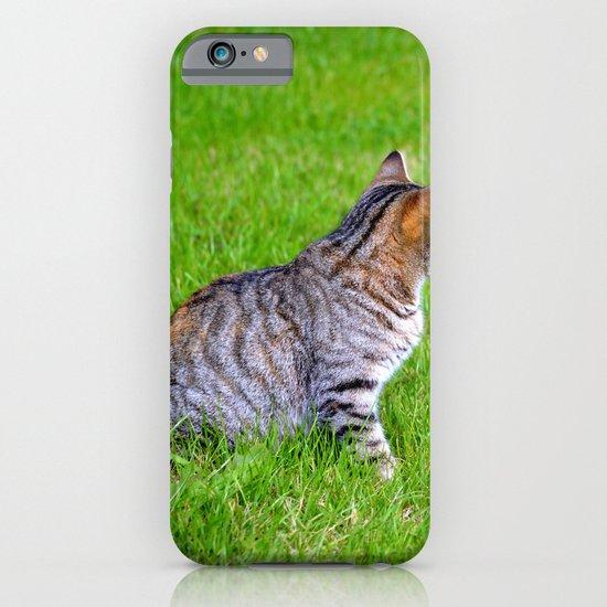 Orange and Tiger Cat iPhone & iPod Case