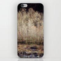 Birches in Winter iPhone & iPod Skin