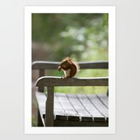 Red Squirrel Snack Time Art Print