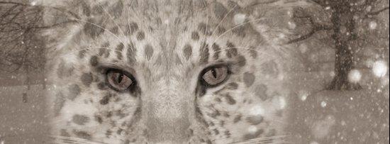 Snow Leopard night Art Print
