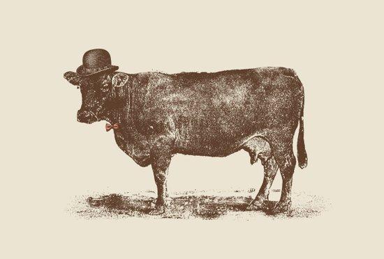 Cow Cow Nut #1 Canvas Print