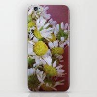 chamomile iPhone & iPod Skin