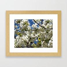 SRING BLOSSOM Framed Art Print