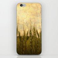 Light in the Grasses iPhone & iPod Skin