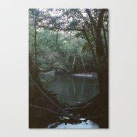 Drabby Swampy Creek Canvas Print