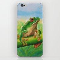 Green Treefrog iPhone & iPod Skin
