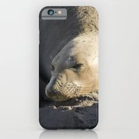 iPhone & iPod Case featuring Elephant Seal: Contentment by Shawn King