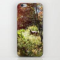 autumn deer. iPhone & iPod Skin