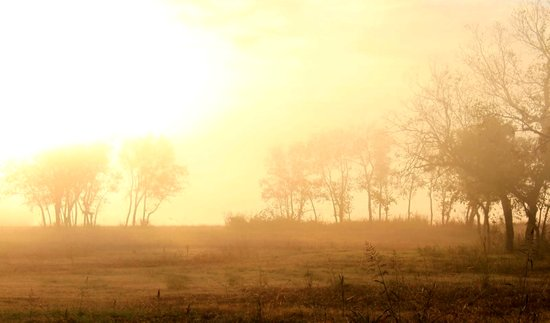 awake to fog ...  Canvas Print
