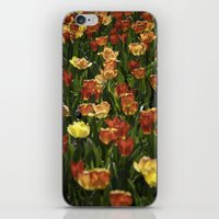 A sea of spring tulips iPhone & iPod Skin